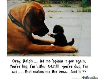 Okay-Ralph-let-me-splain-it-you-again_o_129211