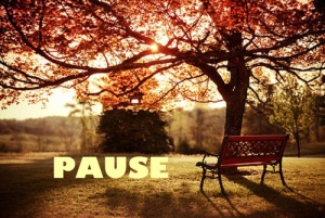 November pause 500